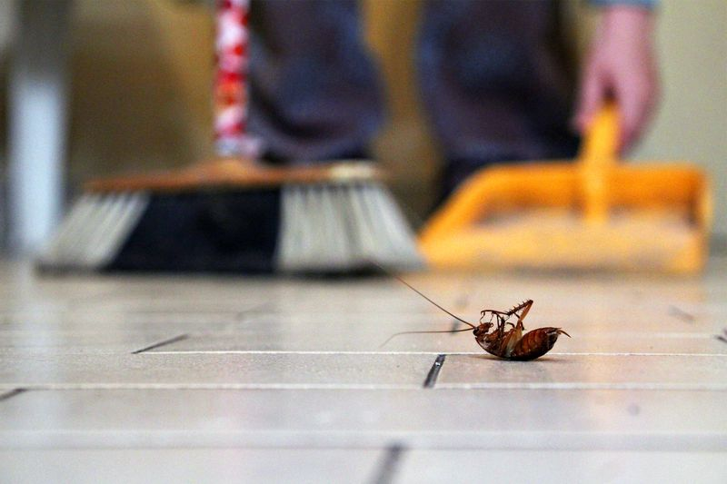 Top Tips for Apartment Pest Control